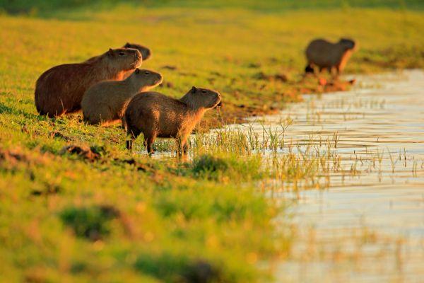 Pantanal | Foto: Banco de Imagens