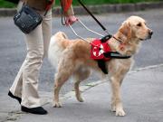 Embarcar com cão-guia, Guichê Virtual