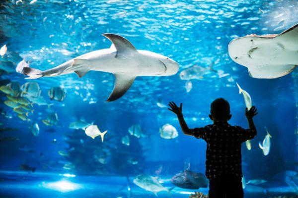 AquaRio: o maior aquário da América do Sul   Foto: Banco de imagens