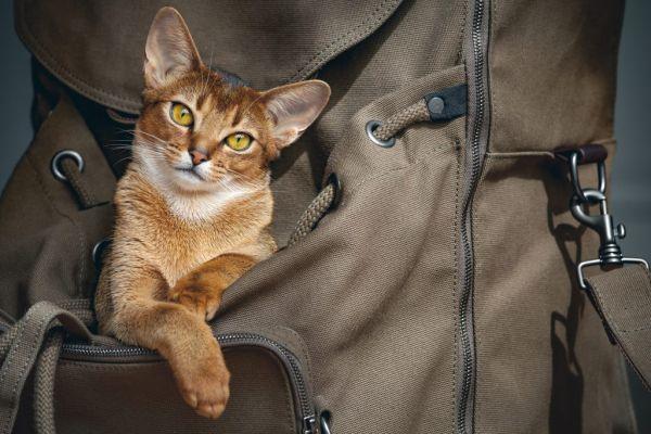 Transporte de animais em ônibus | Foto: Banco de imagens